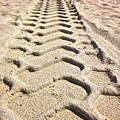 Beach Tracks by Gwyn Newcombe