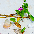 Beach Treasures by Marilee Noland