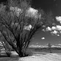 Beach Tree by Dave Perks