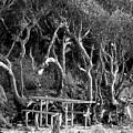Beach Trees by Patricia Januszkiewicz