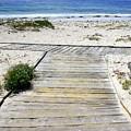 Beach Walk by Carol Groenen