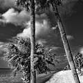 Beach Walk - Port Charlotte Beach Park, Florida by Mitch Spence