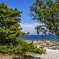 Beach Walk by Roberta Bragan