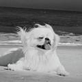 Beachbum Black And White by Ania M Milo