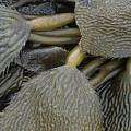 Beached Kelp by Tim Grams