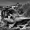 Beached Tree Stump by David Patterson