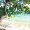Beachscape Tree by Savanah Plank