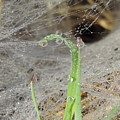 Beaded Web by Luke George