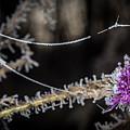 Beadwork by Annette Berglund