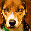 Beagle Hound Dog In Oil by Kathy Clark