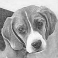 Beagle by Karen Townsend