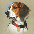 Beagle by Marshall Robinson