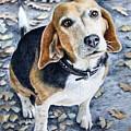 Beagle Nanni by Nicole Zeug