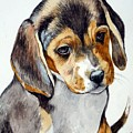 Beagle Puppy by Christopher Shellhammer