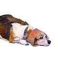 Beagle Thoughts by Amy Kirkpatrick