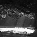 Beams Of Light by Hazy Apple