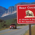Bear Country In Montana by Carl Purcell