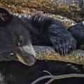 Bear Cub 2 by Mitch Shindelbower