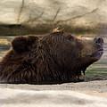 Bear Dip by Linda Kerkau