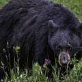 Bear Gaze by Elizabeth Eldridge
