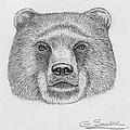 Bear by George Sonner