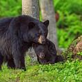 Bear Hugs by Dale J Martin