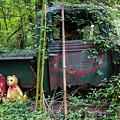 Bear In The Woods by Paul Kukuk