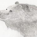 Bear In Water by Jacqueline Essex