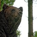 Bear by Ingrid Dendievel