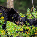 Bear Kisses by Greg Wagstaff