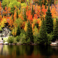 Bear Lake Autumn by Lesley Prentice