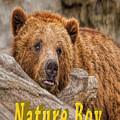 Bear Nature Boy by LeeAnn McLaneGoetz McLaneGoetzStudioLLCcom