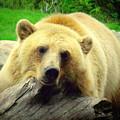 Bear On A Log by John Olson