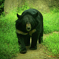 Bear On The Prowl by Trish Tritz
