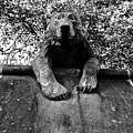 Bear On The Wall by Rachel Morrison