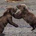 Bear Play by Kathy Whitehurst