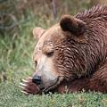 Bear Sleeping by Tammy Crawford
