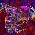Bearded Bee Macro Insect Nature  by PixBreak Art