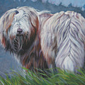 Bearded Collie In Field by Lee Ann Shepard