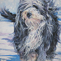 Bearded Collie In Snow by Lee Ann Shepard