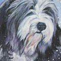 Bearded Collie In Snow by Lee Ann Shepard