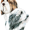 Bearded Collies by Kathleen Sepulveda