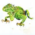 Iguana by Elizabeth Way