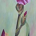 Bearded Iris by Elizabeth Bard