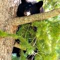 Bearlaxin by Bonnie-Lou Ferris