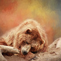 Bearly Asleep by Sharon McConnell