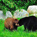 Bears In Love by Dave Steers
