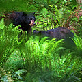 Bears In The Ferns by Sharon Talson