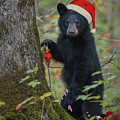Beary Christmas Card by Everet Regal