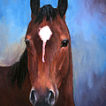 Beau  Quarter Horse Portrait by Kim Corpany